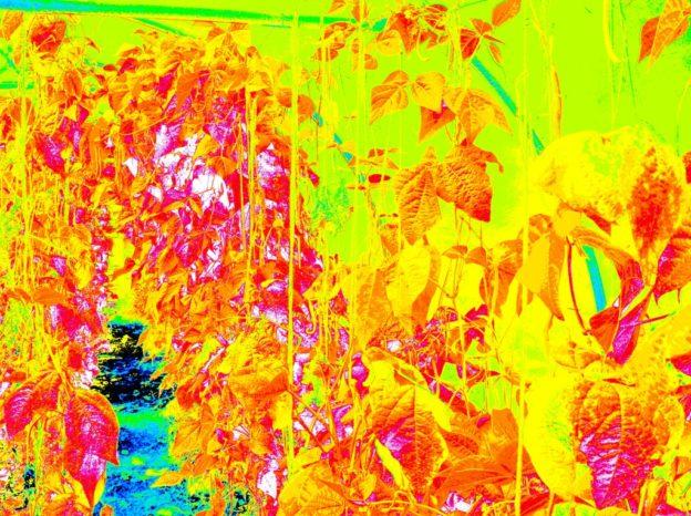 False colour NDVI image